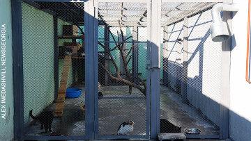 Тбилисский приют для бродячих собак и кошек осмотрели защитники животных