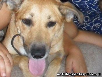 - Собаку зовут Мэри, ей 5 лет, привезли ее из Италии