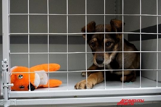 В приюте много собак, которые пострадали от жесткого обращения. Фото: АиФ-Самара / Ксения Железнова