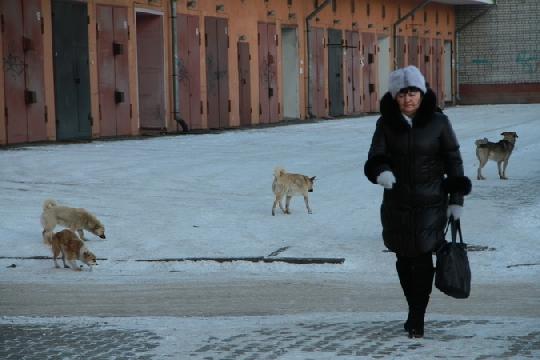 Содержание бездомной собаки обойдется амурским властям в 4000 рублей в месяц