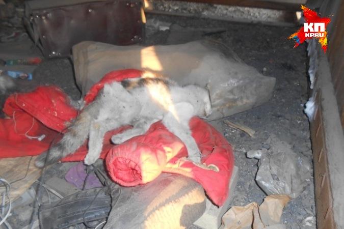 В Чите платный приют для животных оказался смертельным
