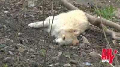 В Керчи обещают массово травить собак