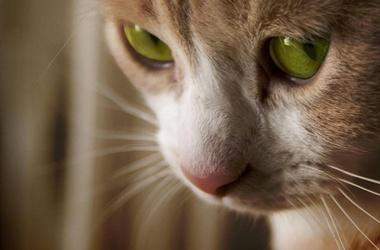 Зоозащитники говорят, что проблемой бездомных животных никто не занимается