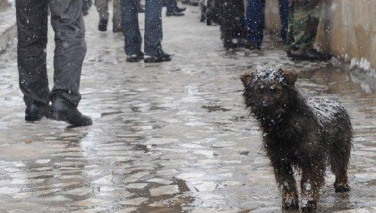 Полиция проверяет информацию об акции догхантеров во Владивостоке