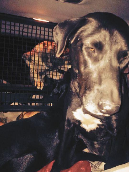 Сочинские бездомные псы ищут убежища от Олимпиады в Москве
