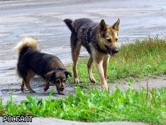 Догхантеров изведут раньше, чем они собак