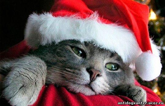 Новогоднее веселье, в сравнении с прочими праздниками дома, вызывает наибольший стресс у домашних питомцев