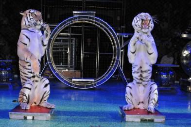Гастролирующий в городе цирк-шапито не имеет документов о происхождении животных