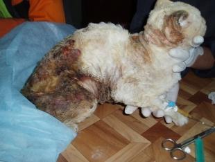 Люди-звери. Боль сожженого кота вызвала шок общества