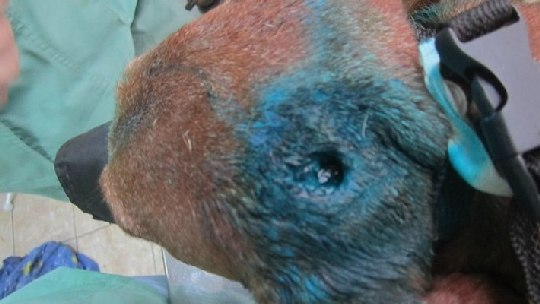 Самарские живодеры прострелили голову таксе и выкинули ее в мусорный бак