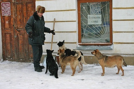 Куда делись «собачьи» деньги?