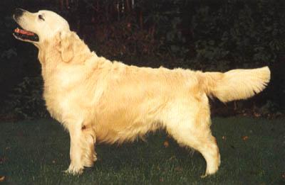 Самарский призывник отправился в армию вместе со своей собакой