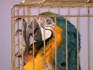Попугаев отправили под арест