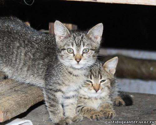 Нужна помощь! Живодеры из ЖЭКа замуровали котят в подвале