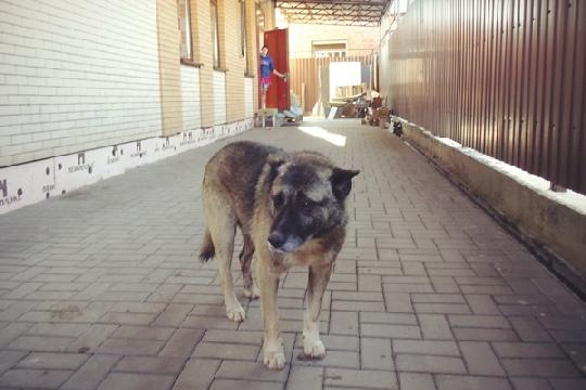 Собачья верность: три года этот пес преданно и беззаветно сторожит бывший хозяйский дом. Фото: Елена Михеева/РГ