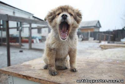 Собак и кошек в Приамурье начнут чипировать с первого января