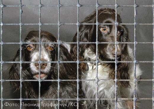 Бездомным животным окажут последнюю милость