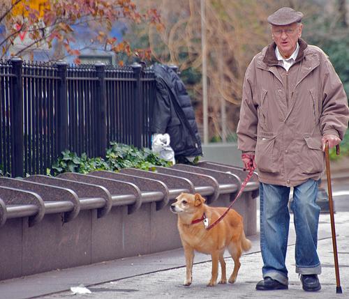Самой популярной «породой» среди пожилых людей остаются дворняги