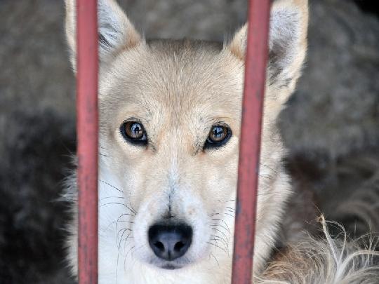 Тематическая иллюстрация. Собака. Автор фото: Оленникова Мария, IrkutskMedia