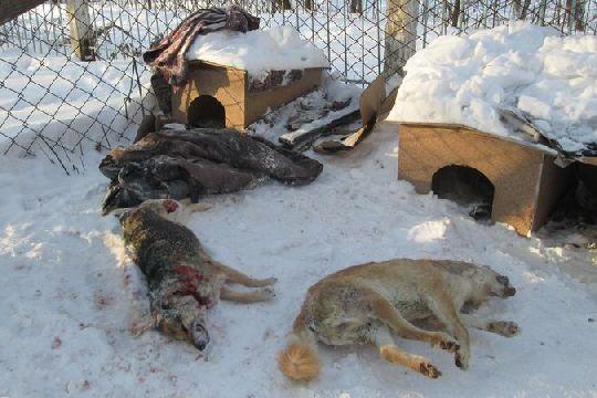 В Новосибирске у Дома ветеранов изрубили собак топором