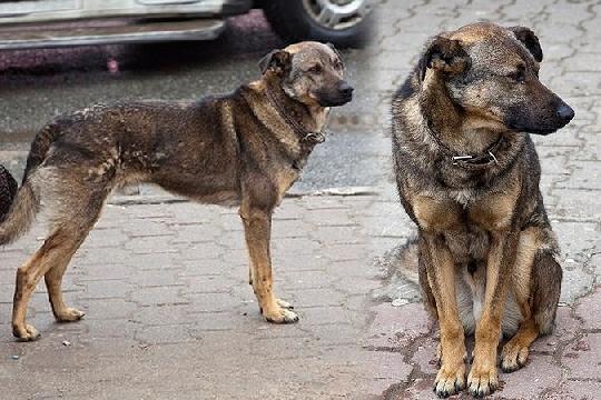 В Подмосковье убили пса, который почти два года ждал хозяина на остановке