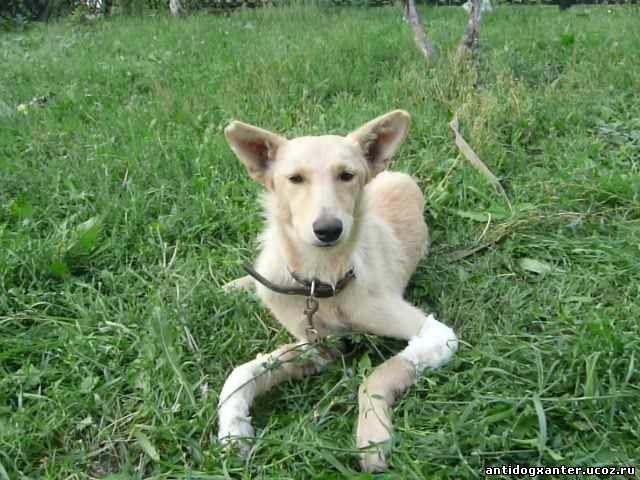 Врачи оренбургской ветклиники спасли собаку от ампутации лапы