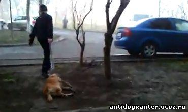 Жительница столицы сняла на камеру мобильного телефона кадры убийства собак средь бела дня в одном из жилых районов Кишинева.