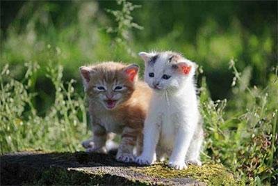 Марсельский живодер ответит за демонстрацию издевательств над котенком