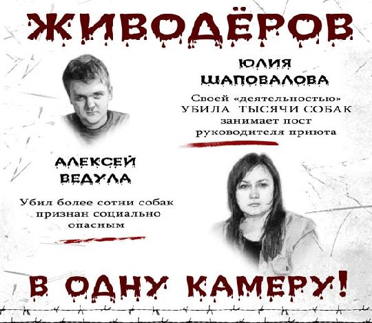 Стерилизованных собак на улицы возвращать не нужно- Юлия Шаповалова