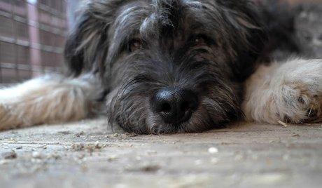 Догхантеры Комсомольска-на-Амуре продолжают истязать собак, а людей травить запахом жженой резины