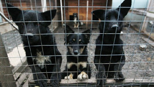 Полиция задержала догхантера, травившего собак во Владивостоке