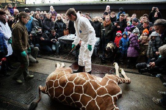 Жираф, тысяча бродячих псов и право убивать