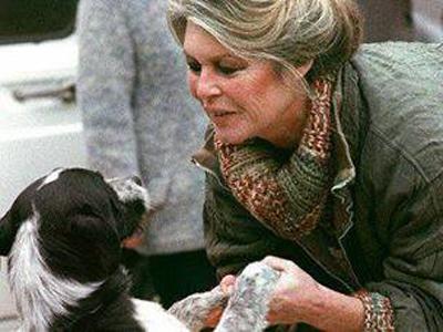 Брижит Бардо просит Путина защитить бездомных собак