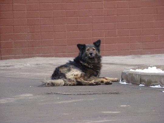 Догхантеры проникли в руководства вуза и используя служебное положение убивают собак