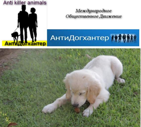 Официальный сайт МОД АнтиДогхантер