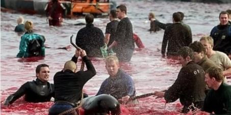 Общество защиты животных: Спасите дельфинов!