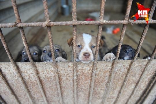 Пермскому приюту для животных «Островок надежды» требуется помощь