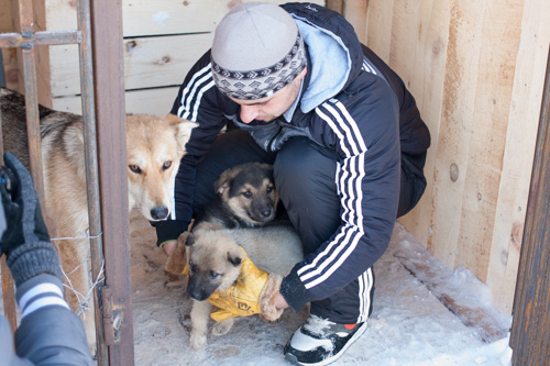 На Сахалине рядом с селом Христофоровка построили новый муниципальный бюджетный питомник для бездомных животных.