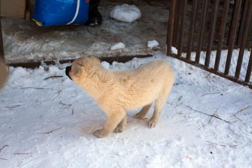На Сахалине появился новый питомник для животных