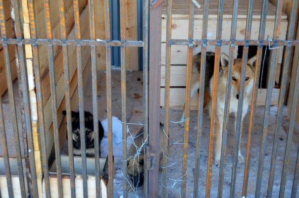 Открытие муниципального пункта передержки для бездомных животных
