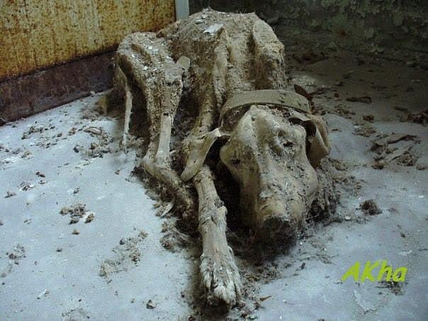 Тем, кто в связи с ситуацией в Юго-Восточной Украине уезжает, а своих животных оставляет дома, посвящается…