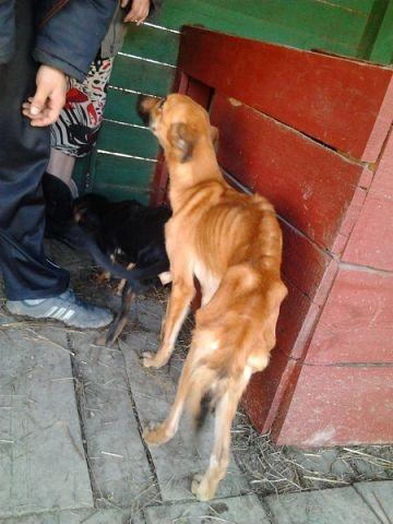 «Освенцим для животных» скрылся в одном из домов в Кольчугино