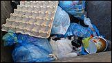Барнауле друг семьи при маленьком ребенке выбросил двух кошек