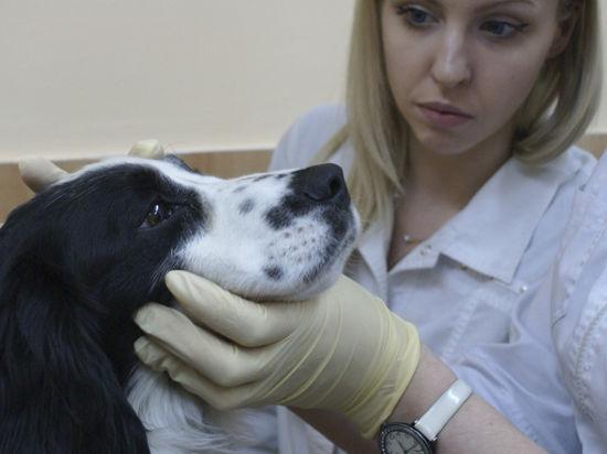 Фонд «Потеряшки» получил грант и открыл ветеринарный кабинет для бездомных животных
