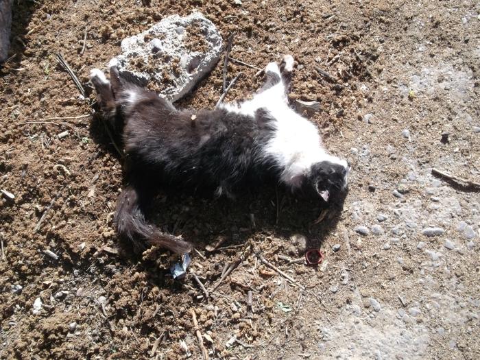 Каждое домоуправление имеет план по сдаче убитых собак и кошек.