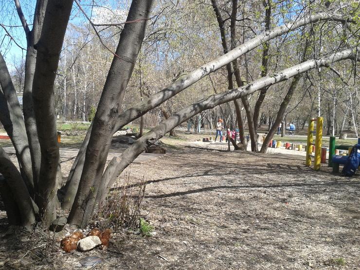 Кровавый ритуал совершил в Харитоновском парке неизвестный живодер-сатанист