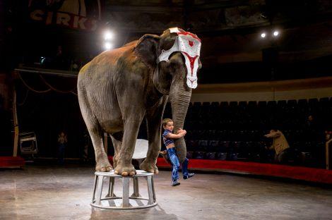 Защитники животных обратились к Рижскому цирку с призывом незамедлительно прекратить сотрудничество с известным дрессировщиком Ларсом Хольше