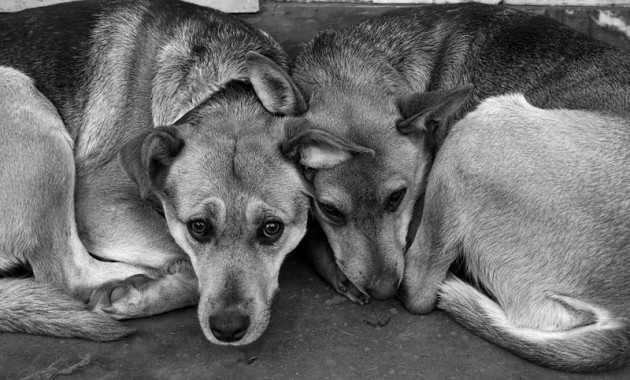 Местные власти расправляются с бездомными собаками на глазах у жителей