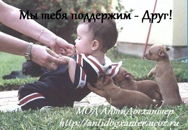 за пропаганду жестокого обращения с животными