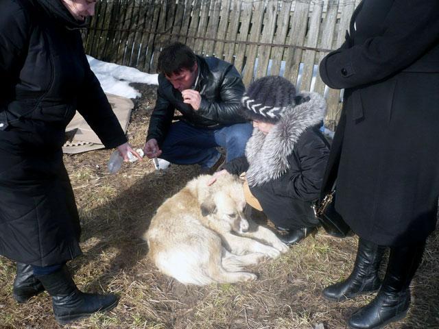 Закон О ветеринарии, запрещающие отстрел бездомных собак
